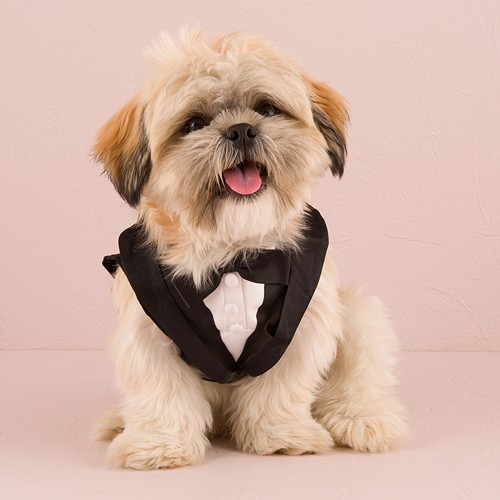 Pets at Weddings ~ Dogs Accessories
